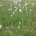 Mini-Me will nicht laufen. GG überredet, plaudert und schaffts es immer wieder ein paar Meter. Ich schau mir während dessen die schönen Blumen an.